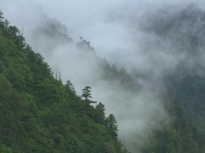 この霧がキームンのうまみを作り出しています。