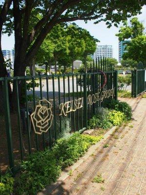 今回ピクニックの場所に選んだのは千葉県の京成バラ園です。