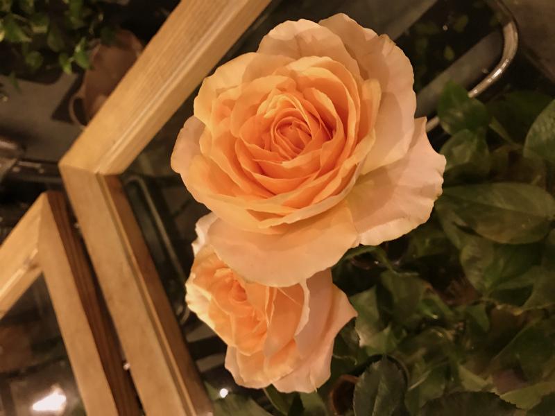 ディナーセットのおみやげのバラは店内に飾ってありました。