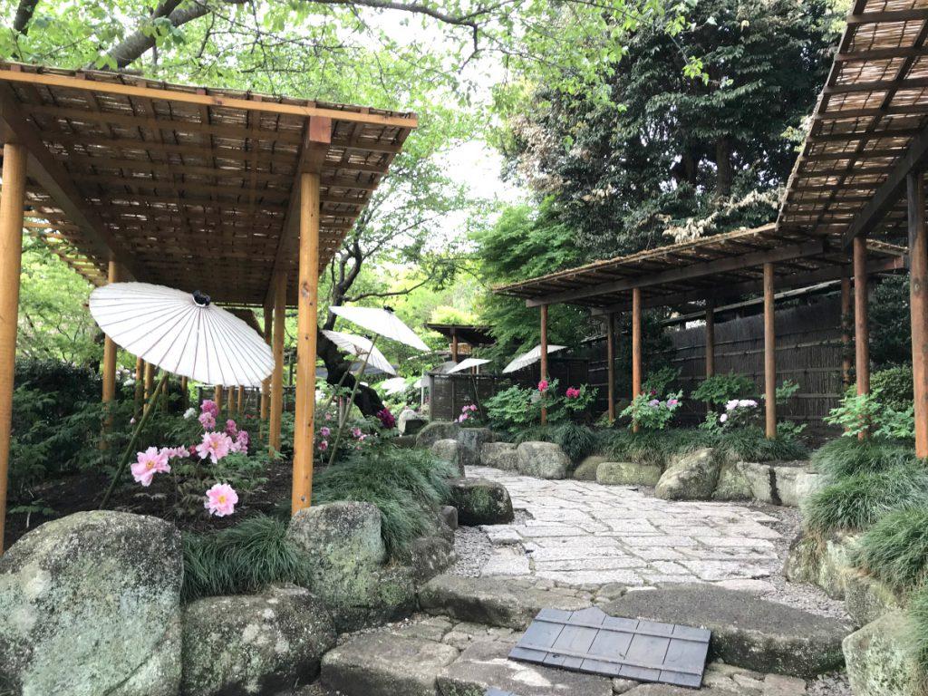 風情を感じる鶴岡八幡宮のぼたん園