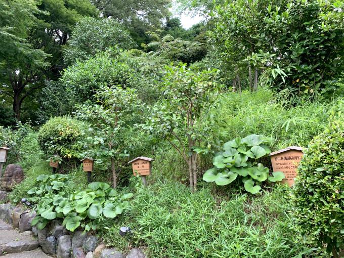 たしかに庭園も人が少ない感じ。でも気温の高さも影響しているのかな?