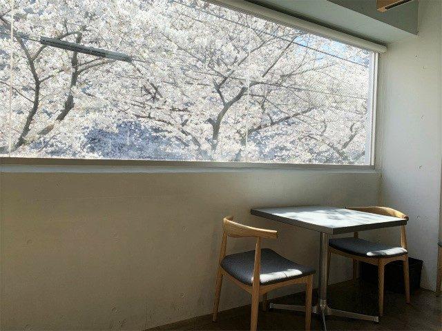 目黒川沿いにあるビルの2Fなので、桜の時期は窓からの景色が見事です。(2019年4月撮影)