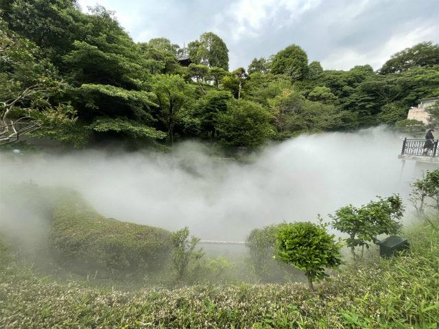 すると、幽翠池がすごいことになっていました!!!